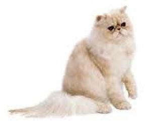 Stránka o mačičkách venovaná baške